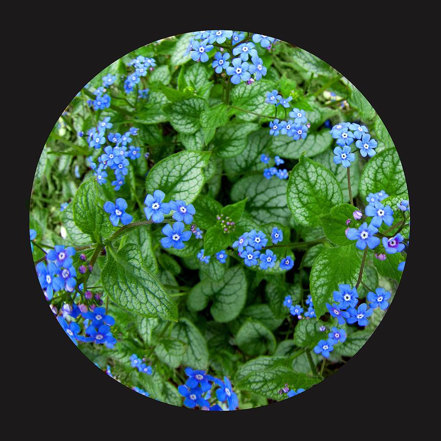 Flowers Photograph - Circle Of Blue by Elizabeth Reynders
