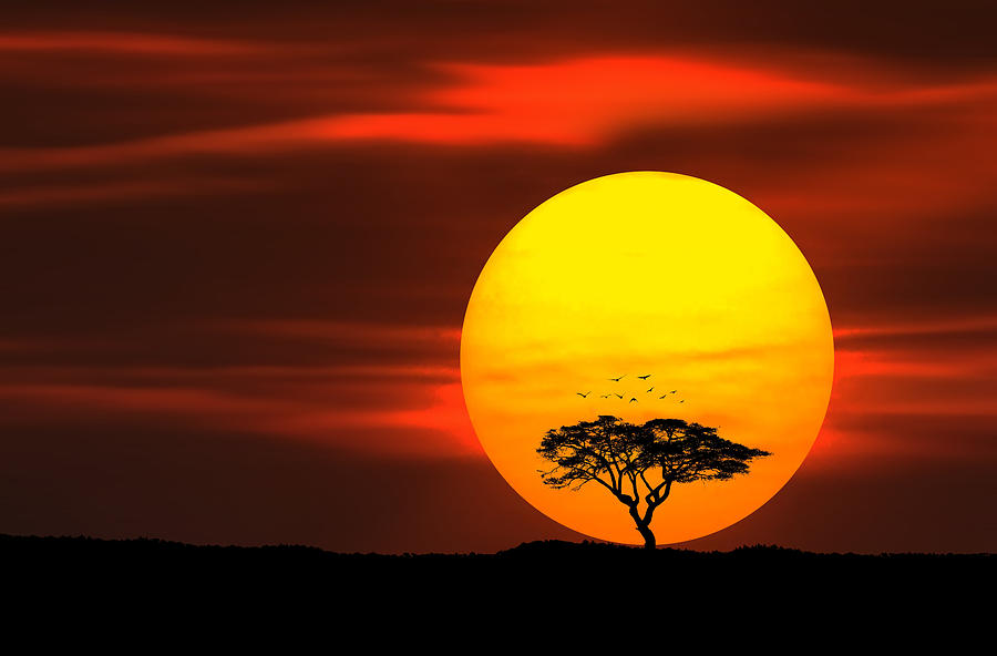Circle Of Life Photograph By Bess Hamiti
