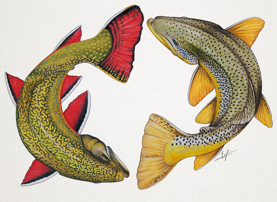Trout Painting - Circling Brook And Brown Trout by Nick Laferriere