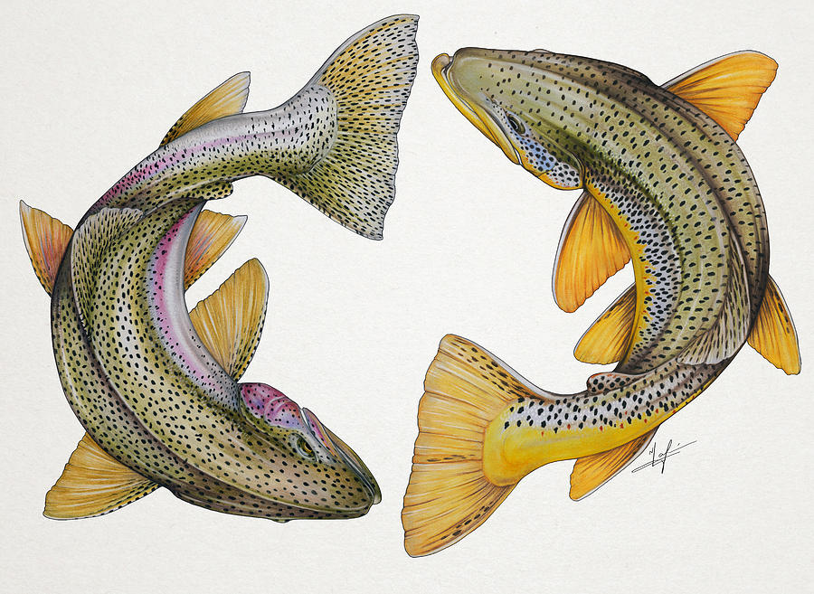 Rainbow Painting - Circling Rainbow And Brown Trout by Nick Laferriere
