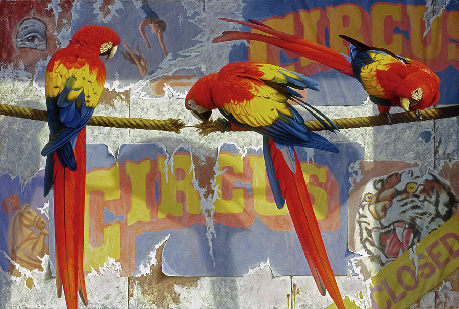Birthday Card Painting - Parrots at the Circus by Brian McCarthy