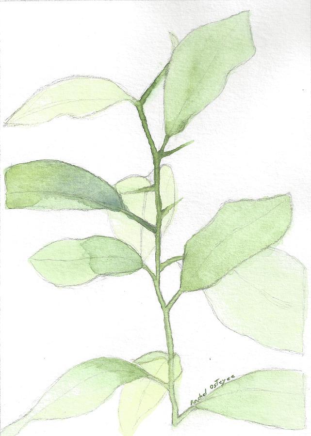 Citrus Painting - Citrus Sapling by Rachel Osteyee