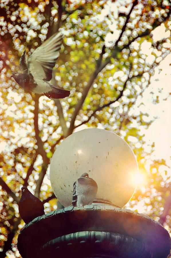New Photograph - City Doves by JAMART Photography