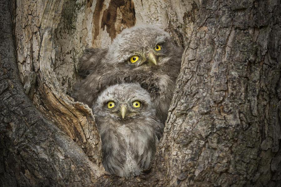 Nature Photograph - Civ And Civ by Alberto Ghizzi Panizza