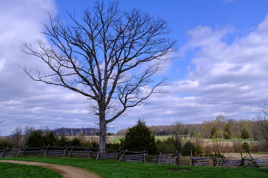 Civil War Fence And Tree With No Leaves Next In Gettysburg Penns by John McLenaghan