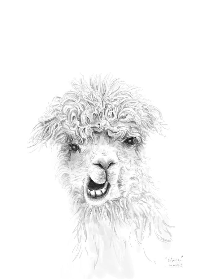 Llamas Drawing - Claire by K Llamas
