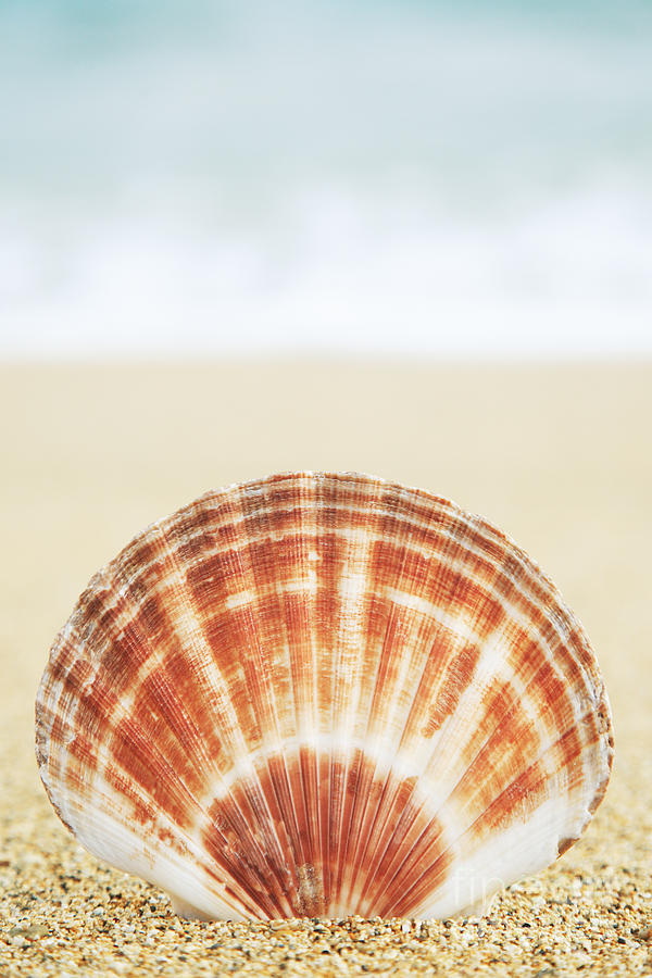 Afternoon Photograph - Clam Shell by Brandon Tabiolo - Printscapes