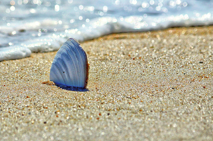 Clamshell in the Waves on Assateague Island by Assateague Pony Photography