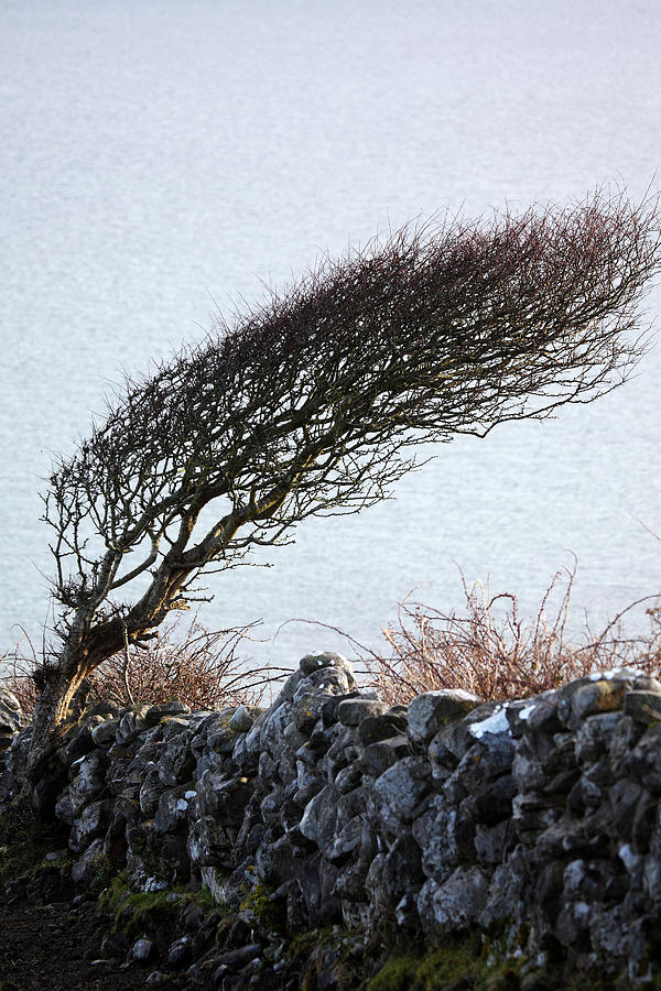 Tree Photograph - Clare Coast Tree by Tom  Doherty