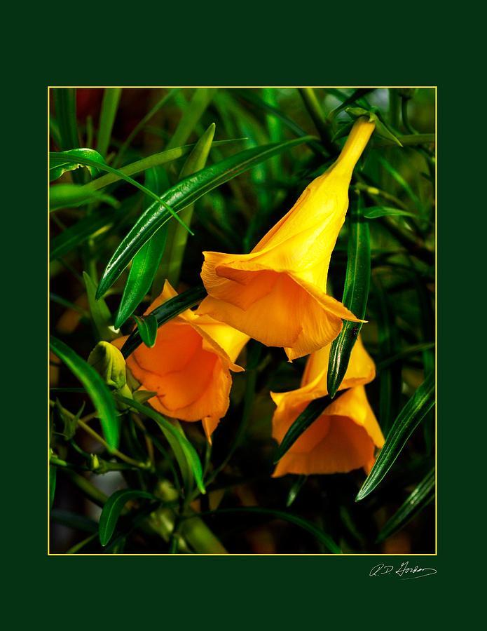 Flower Photograph - Clarion Call by Richard Gordon