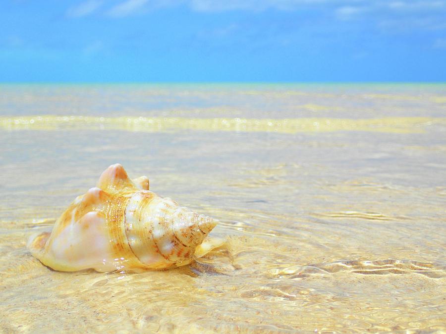 Bahamas Photograph - Clarity, Simplicity by Lora Louise