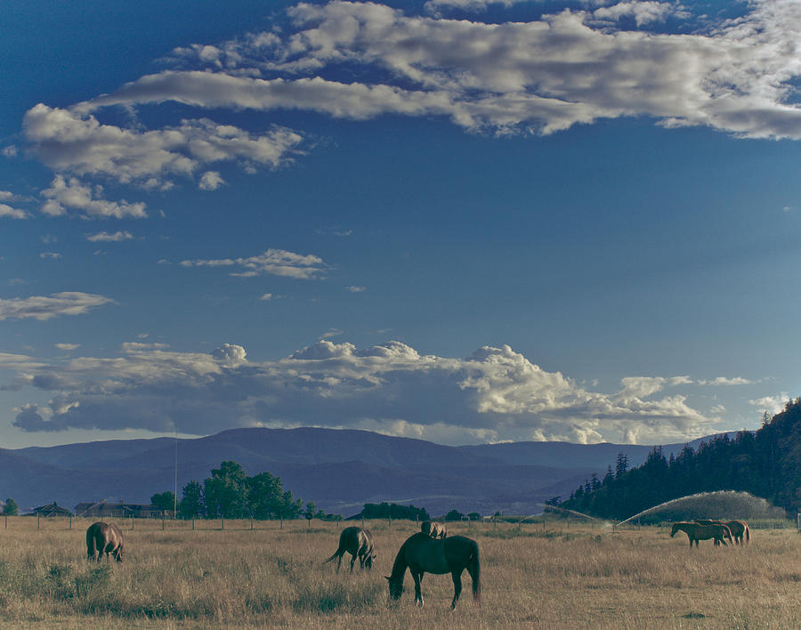 Horse Photograph - Classic Country Scene by Trance Blackman