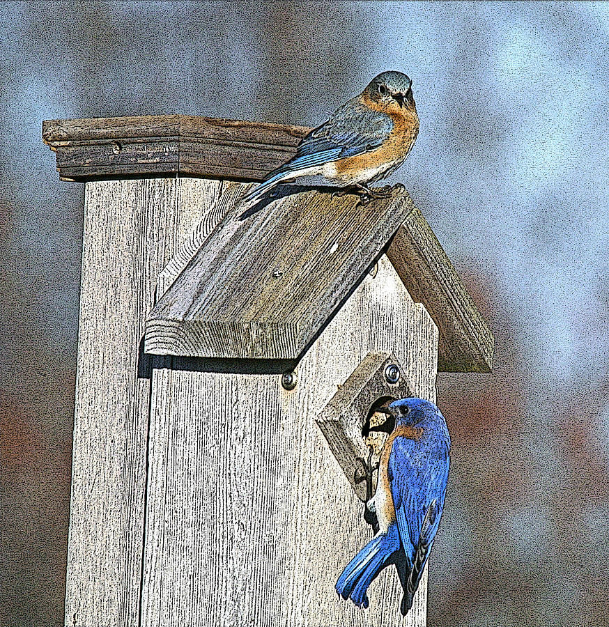 Nature Photograph - Cleaning House by Robert Pearson
