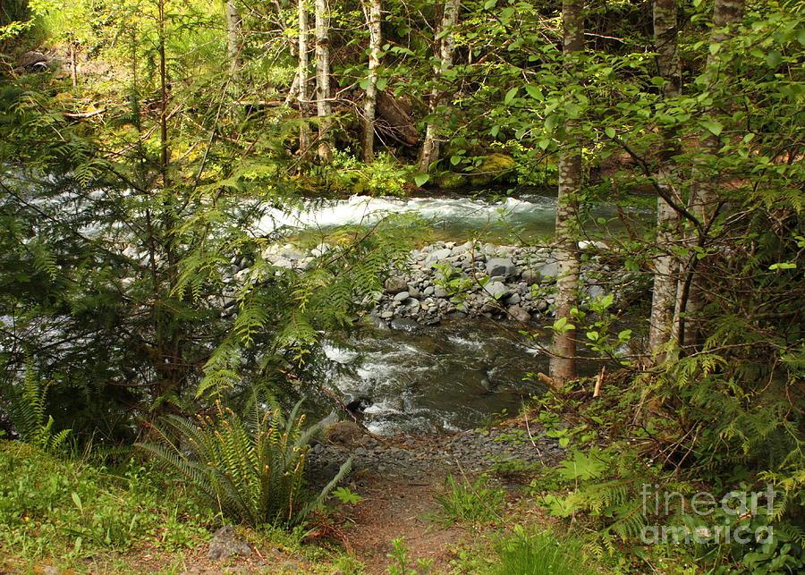Clear Mountain Stream Photograph