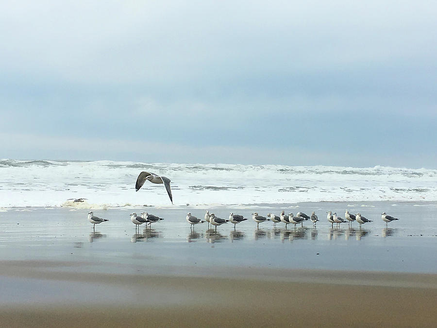 Seagulls Photograph - Cleared For Takeoff by Donna Blackhall