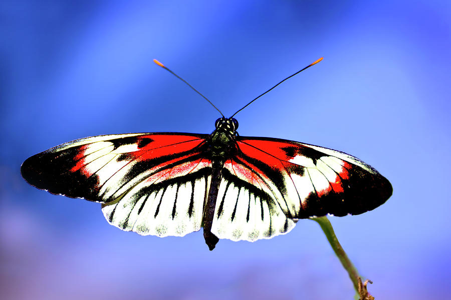 Butterfly Photograph - Cleared For Takeoff by Mark Andrew Thomas
