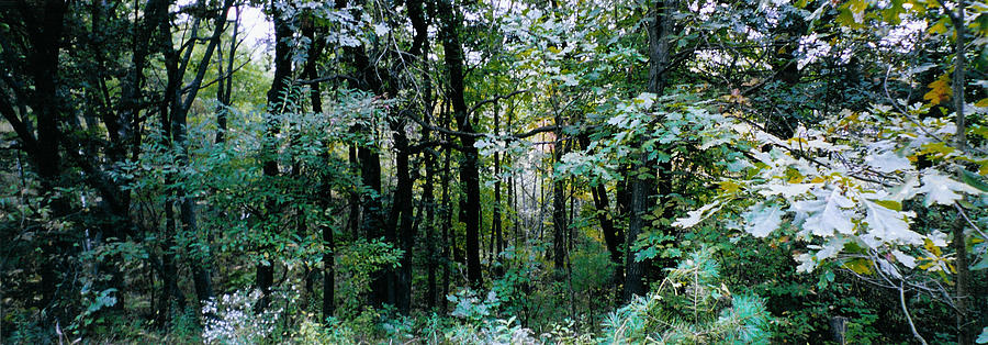 Forest Photograph - Clearing Glimpsed 1 by Tom Hefko