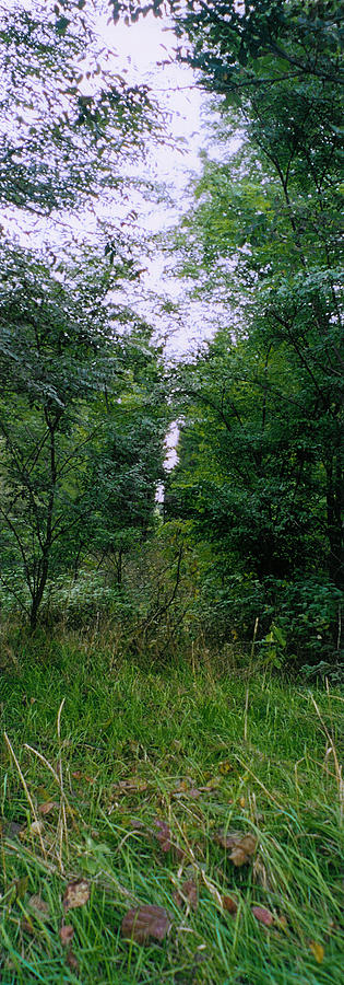 Forest Photograph - Clearing Glimpsed 7 by Tom Hefko