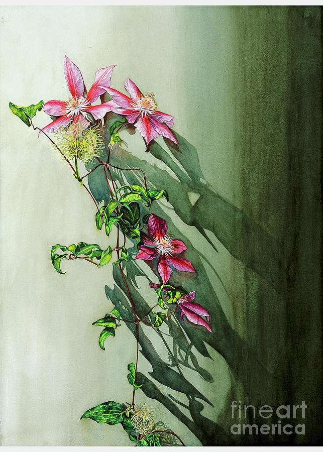 Clematis 1 Painting