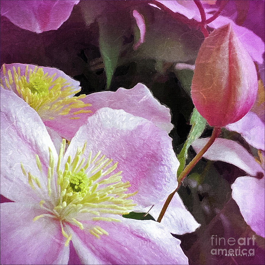 Clematis Bud Pink Digital Art
