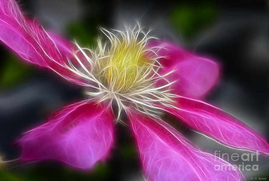 Flower Photograph - Clematis In Pink by Deborah Benoit