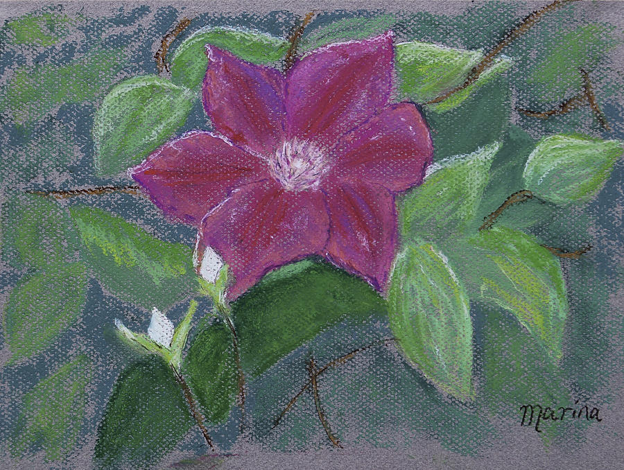 Pastel Pastel - Clematis by Marina Garrison