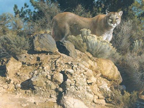 Cliff Dwellers - Cougar Digital Art by Carl Brenders