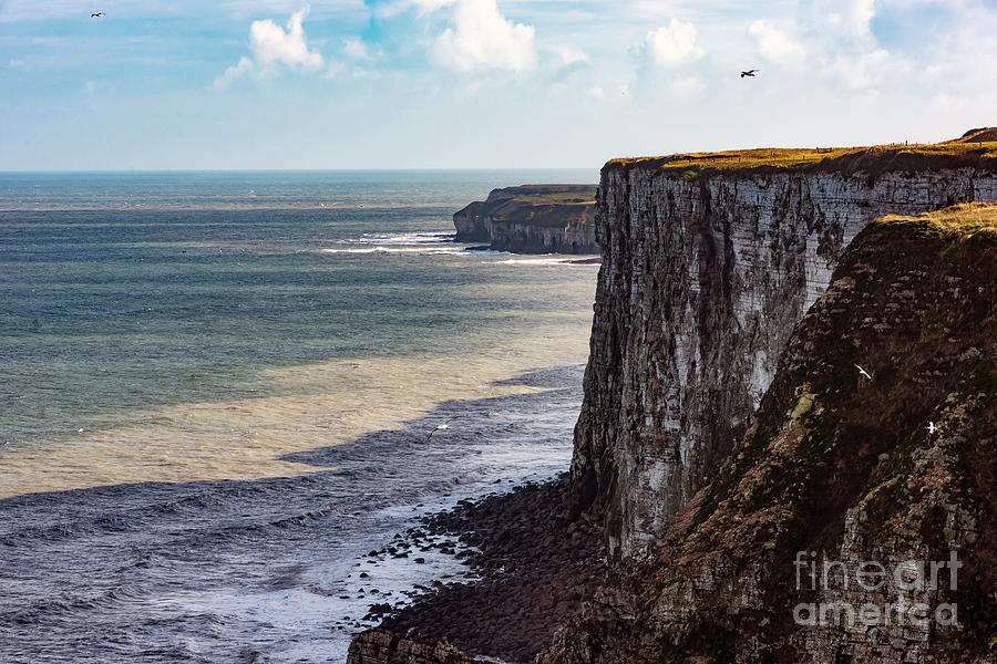 Cliffs of Bempton by Anthony Baatz