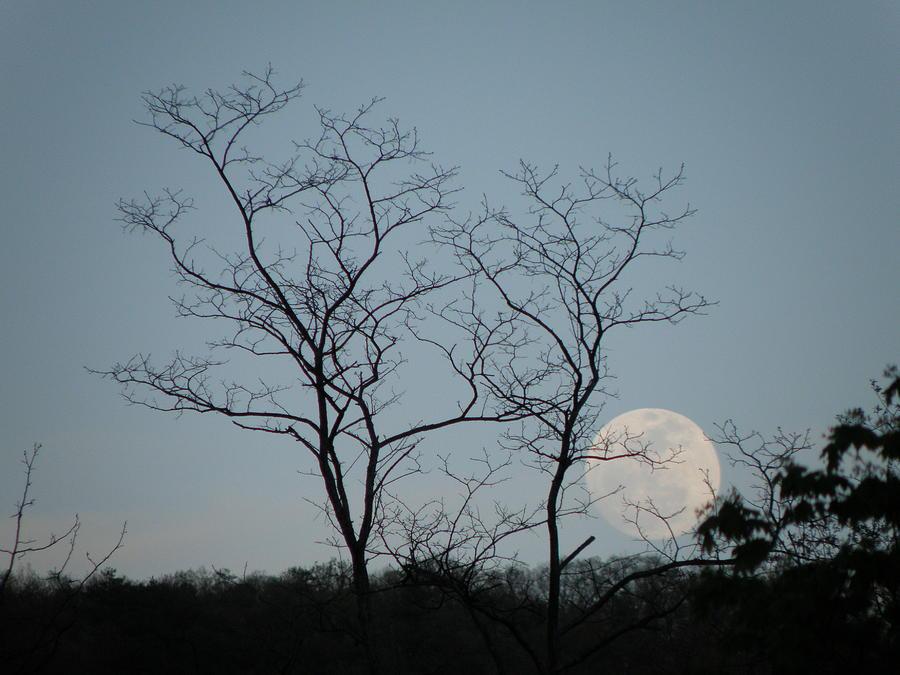 Moon Photograph - Climbing Moon by Krista  Simmons