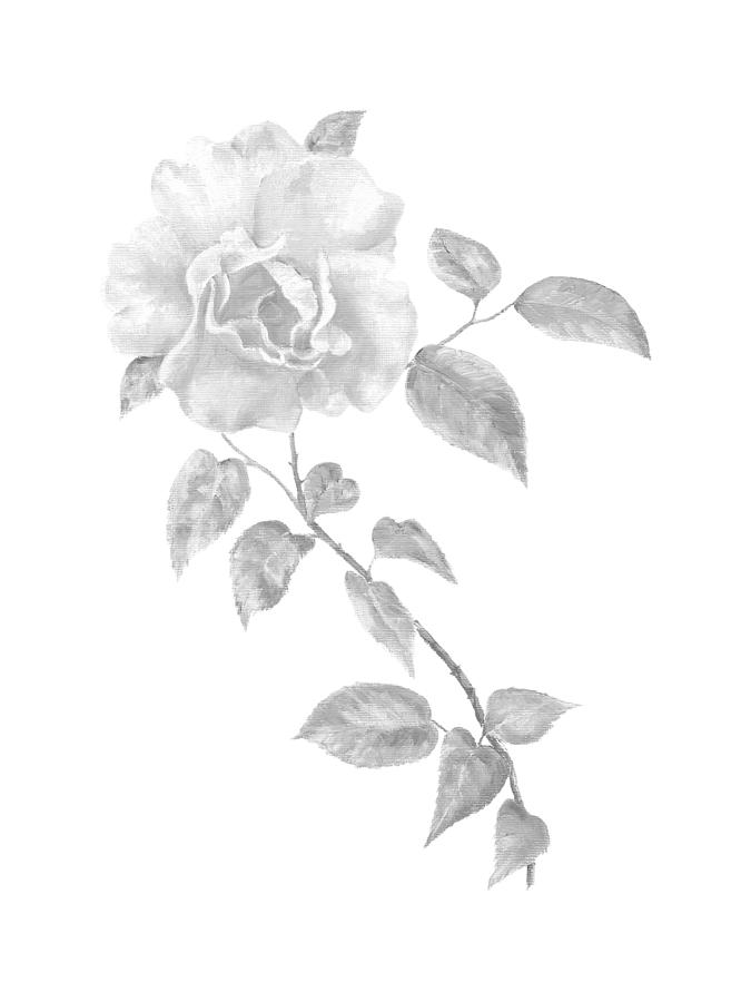 Climbing Rose II by Elizabeth Lock