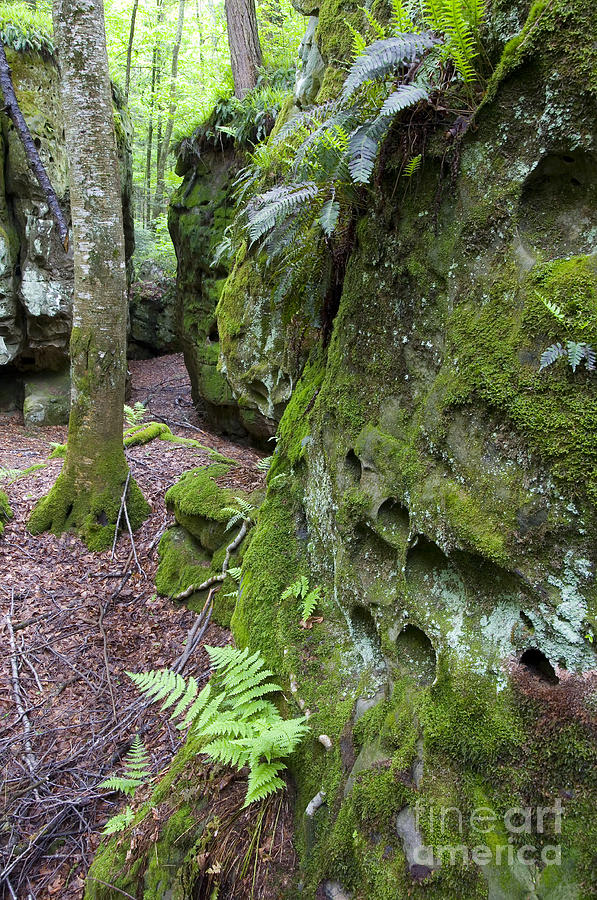 Pocahontas County Photograph - Clinging To The Rock by Thomas R Fletcher