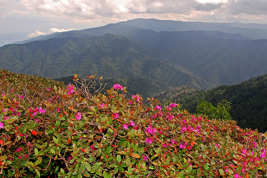 Clingman's Dome Photograph - Clingmans Dome From Cliff Top by Alan Lenk