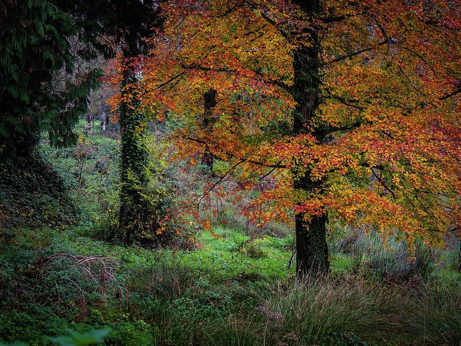Autumn Photograph - Clondegad Woods In Autumn by James Truett