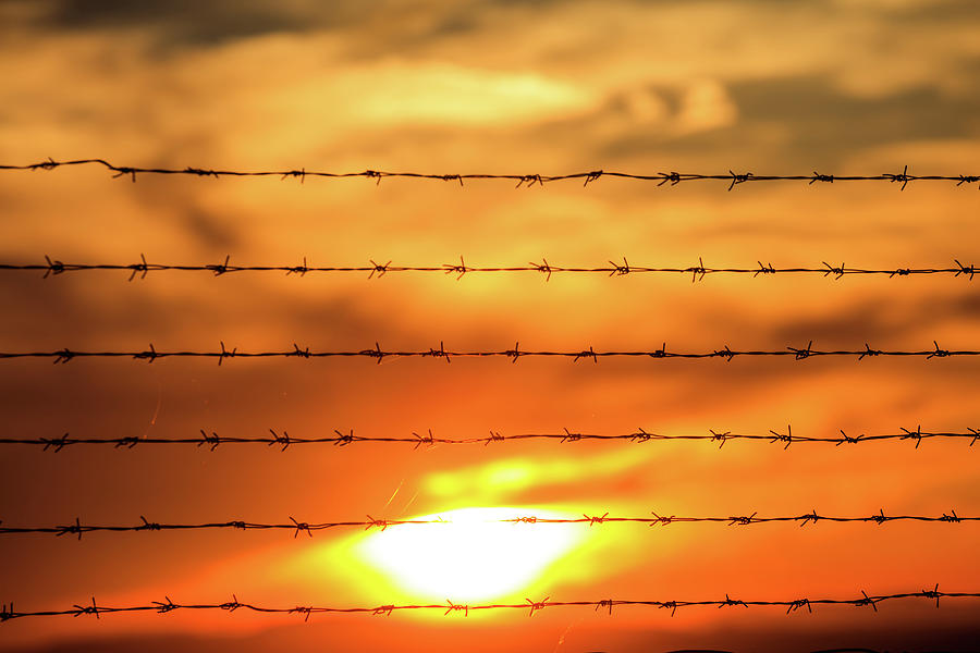 Sunlight Photograph - Close-up Of Barbed Wire At Sunset  by George Tsartsianidis