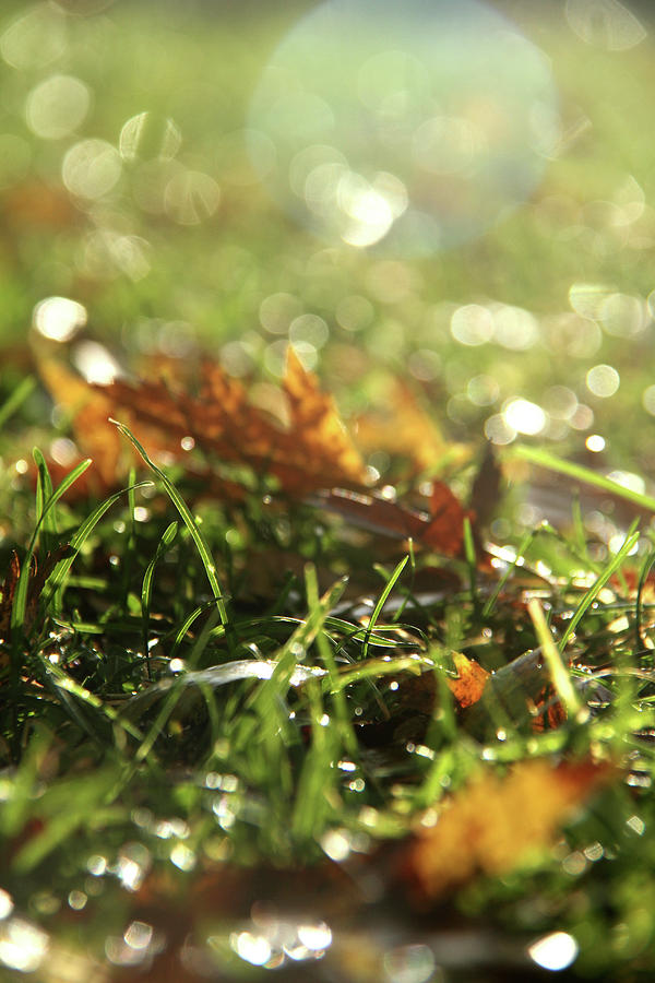 Close-up of dry leaves on grass, in a sunny, humid autumn morning by Emanuel Tanjala