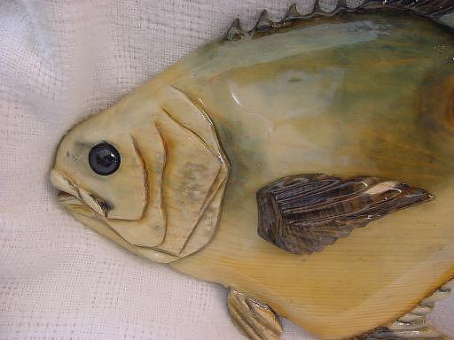Fish Relief - Close Up Of Permit-sold by Lisa Ruggiero
