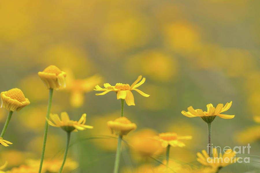 Usa Photograph - Close Up Of Yellow Flower With Blur Background by PorqueNo Studios