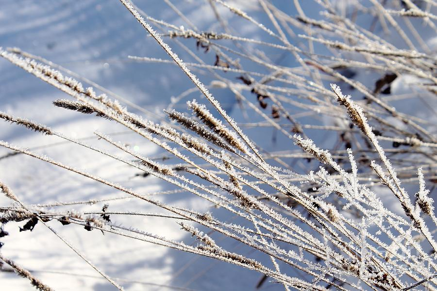 Close-up View Of Frozen Grass. Photograph