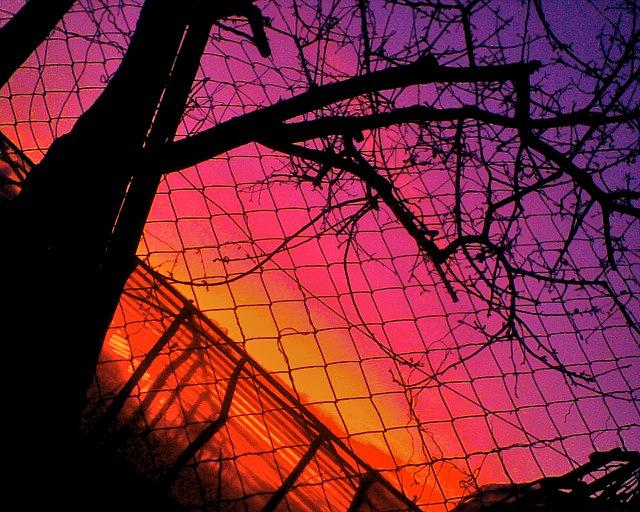 Tree Photograph - Closed Tree And Sunset by Igor Tudoran