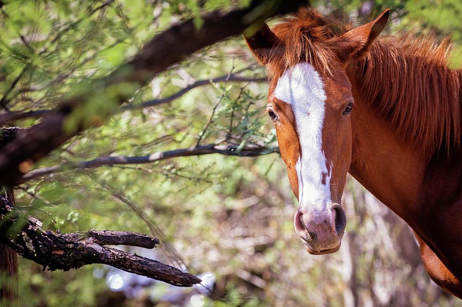 Mesa Photograph - Closeup Of Beautiful Wild Horse With Copy Space by Susan Schmitz