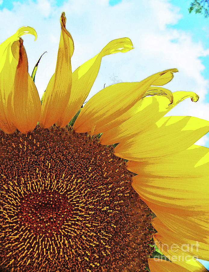 Closeup Poster Sunflower by George D Gordon III