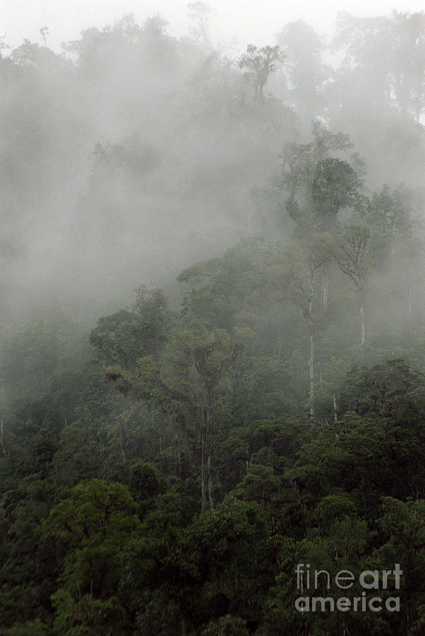 Rainforest Photograph - Cloud Forest by Kathy McClure