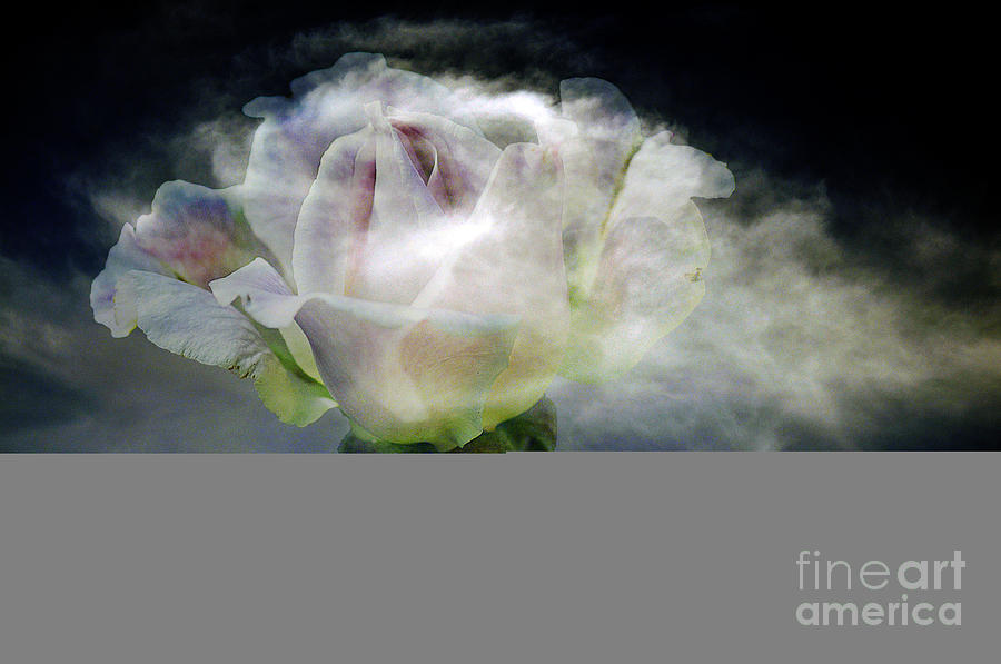 Clay Photograph - Cloud Rose by Clayton Bruster
