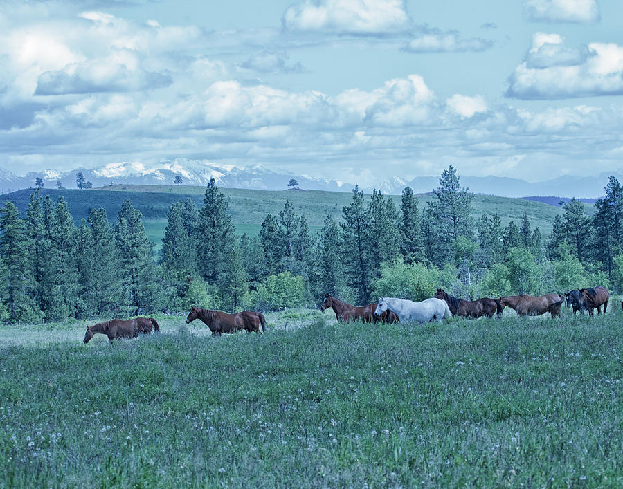 Clouds Photograph - Clouds And Horses by Eleszabeth McNeel