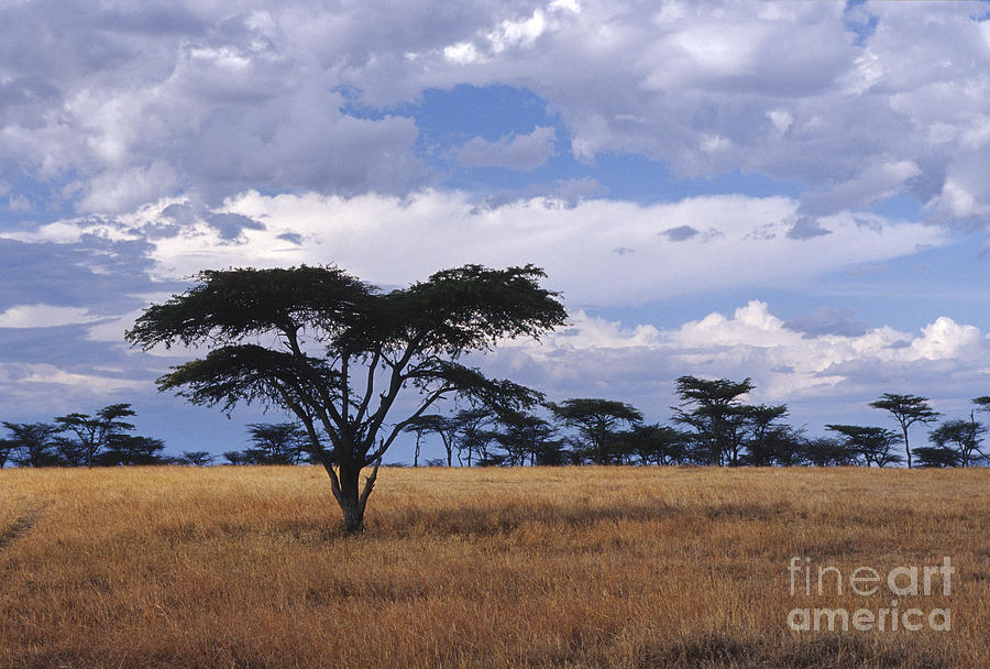 Africa Photograph - Clouds Over The Masai Mara by Sandra Bronstein