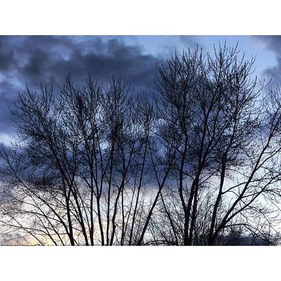 Life Photograph - Clouds Through Trees by Frank J Casella