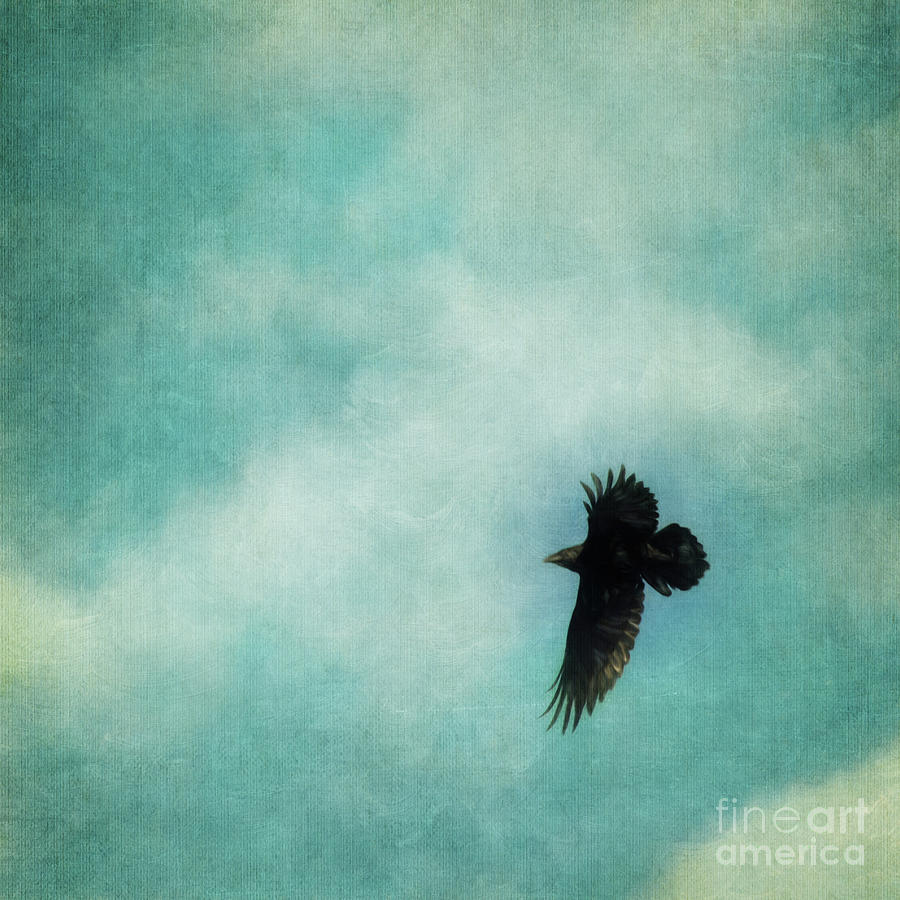 Soaring Photograph - Cloudy Spring Sky With A Soaring Raven  by Priska Wettstein