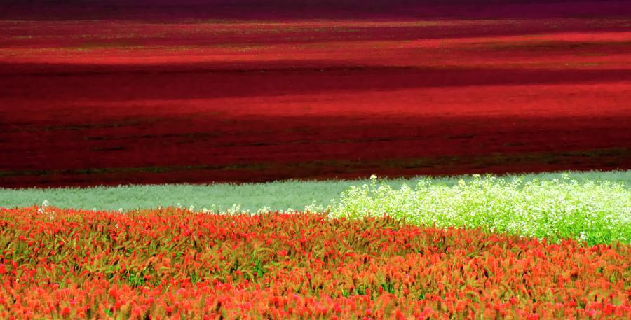 Clover Abstract Photograph