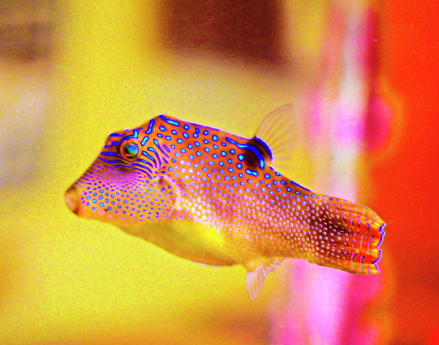Clownfish Photograph