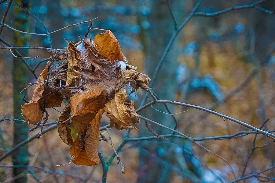 Clump Of Fall - Early Winter Photograph by Desmond Raymond